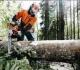 Pakeistos Miško kirtimų taisyklės
